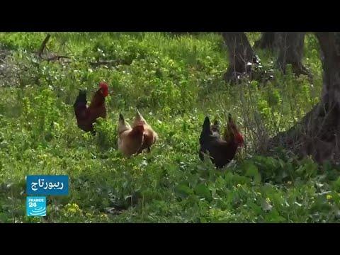 الأرياف في تونس لا تزال تعاني من التهميش رغم التعهدات الحكومية  - نشر قبل 2 ساعة