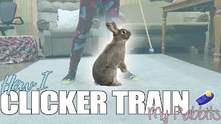 How I Clicker Train My Bunnies: My Clicker Training Routine thumbnail