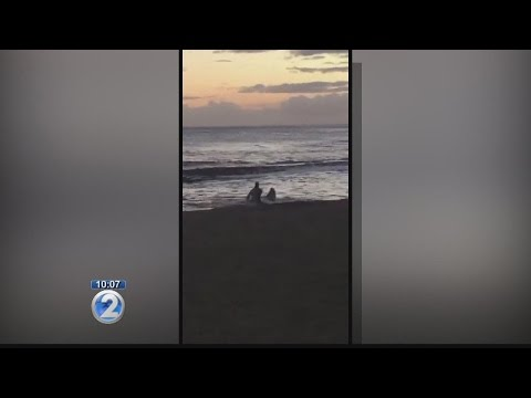 Kauai Mayor says monk seal treatment is unacceptable