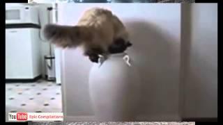 Приколы с кошками Приколы  страшнее кошки зверя нет 1 Смотри!