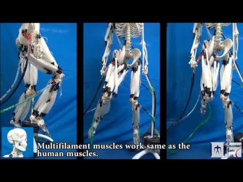 super-ripped robot mimics human muscle | popular science, Skeleton