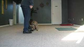 Cincinnati Dog Bootcamp