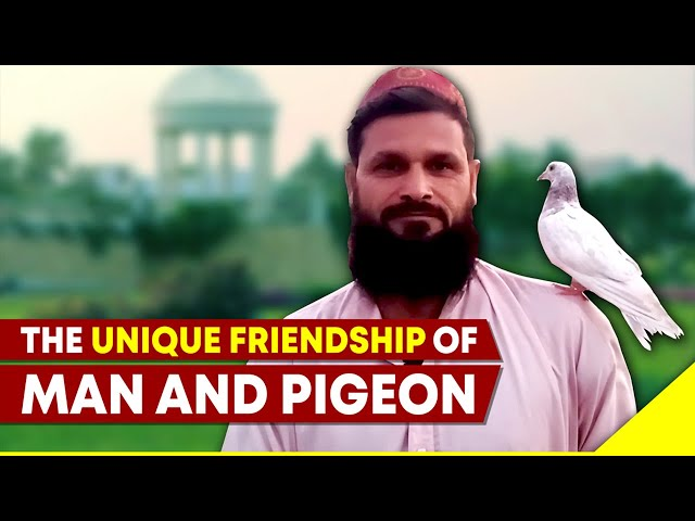 The Unique Friendship Of Man And Pigeon