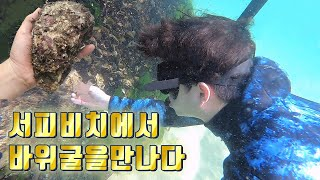 양양 서피비치에서 해산물 채취. (feat. 소라 섭 …