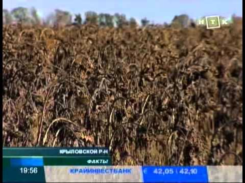 Саженцы на огородах станичников на Кубани уничтожены