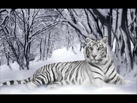 Вышивка бисером: Белый тигр