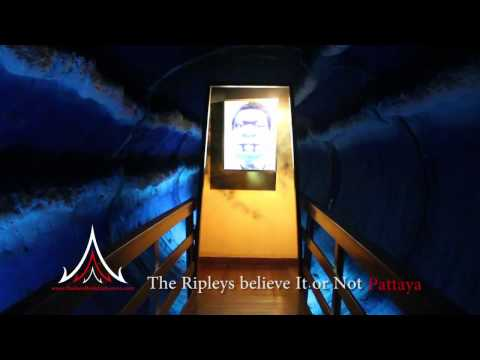 Pattaya Attractions   The Ripleys Believe It or Not Museum