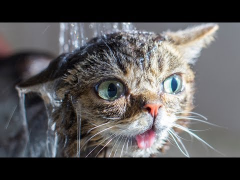 Lil BUB Returns the Favor
