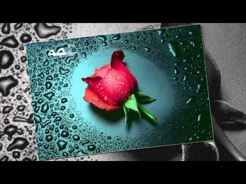 لاجيت صوب الورد