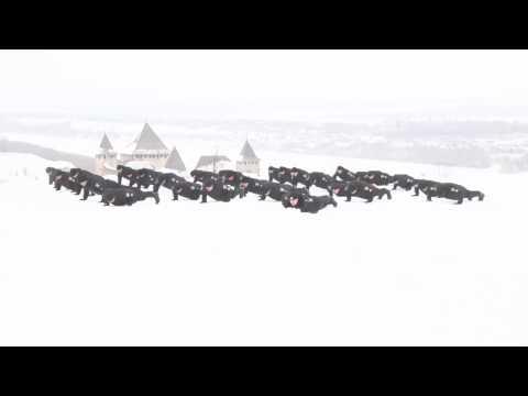Поліцейські Буковини долучилися до флешмобу «22 Pushup Challenge»