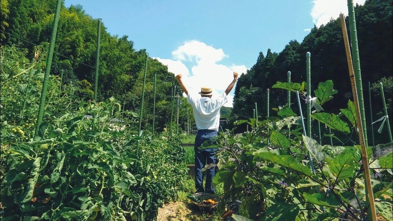 田舎暮らしの夏、始まりました。夏野菜大収穫/夏野菜カレー/川遊び/ 第47話
