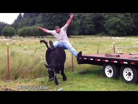 Funny animals farm animals are crazy try not to laugh - Funny pictures farm animals ...