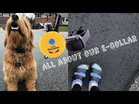 All About Our E-Collar || Service Dog Correction Tool