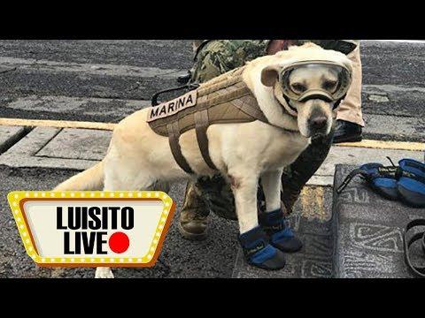 El Terremoto De México - Luisito Live #2