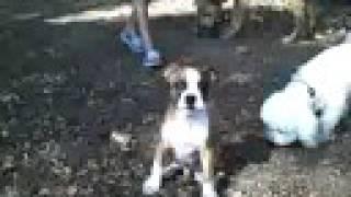 Dog Socialization   Redeeming Dogs - Dog Training   Puppy Socialization   Tod Mcvicker