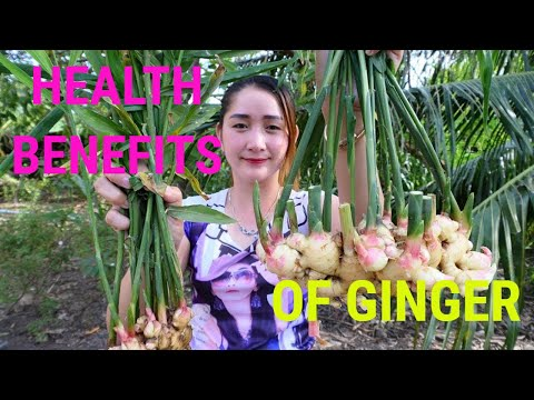 health-benefits-of-ginger- -health-&-fitness-channel-!!!
