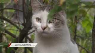 Мальчик насмерть забил котенка камнями