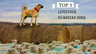TOP 5 LIVESTOCK GUARDIAN DOG BREEDS