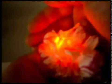 СВЕТЯЩИЕСЯ живые цветы в ДОМАШНИХ УСЛОВИЯХ.mp4