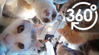 どっちを見ても猫だらけ!猫カフェ360°動画で視界は猫まみれ!