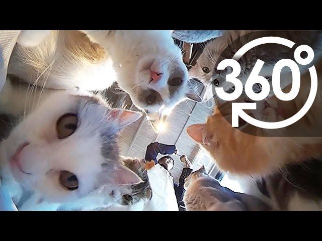 【いきもの目線】猫カフェ②(360Lives / cat cafe vol.2)