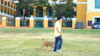 Dog Training Puerto Rico Teaser Trailer