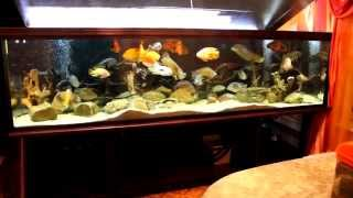 Интерактивный аквариумный туризм №28(Рубрика, куда вы присылаете свое видео и описание аквариума, а мы делаем из этого выпуск. Тема для Заявок:..., 2015-03-04T20:16:37.000Z)