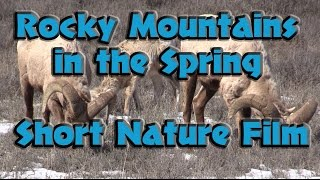 Spring in the Rocky Mountains Short Film - Animals of Teton National Park WY in HD