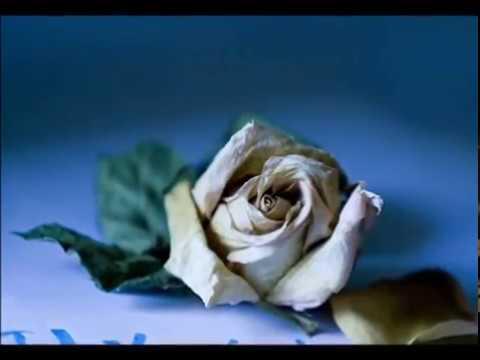 Изображение предпросмотра прочтения – АнастасияСафронова читает произведение «Весна (Белая роза дышала на тонком стебле…)» В.Я.Брюсова