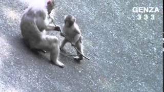 Смешные случаи с животными.  Животные приколы