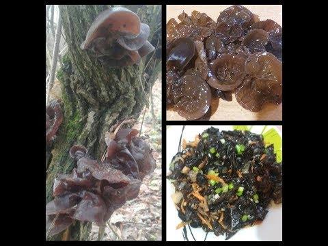 древесные грибы муэр выращивание