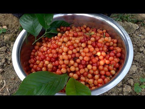 乡村樱桃大丰收,红彤彤一大盆,看着真好吃