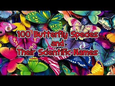 100 Species of Butterflies With Their Scientific Names