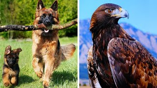 Zwierzęta dla dzieci - Odgłosy zwierząt domowych i dzikich