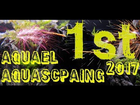 I Nagroda Na Zawodach Aquael Aquascaping 2017 Michal Adamek Youtube