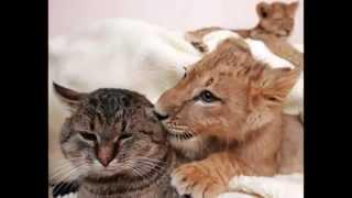 L'amore e gli animali - Animali in amore