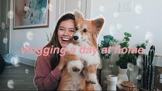 chillin at home vlog - target haul, netflix favs, trader joes | viviannnv