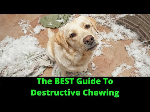 how-to-stop-destructive-chewing-in-dogs