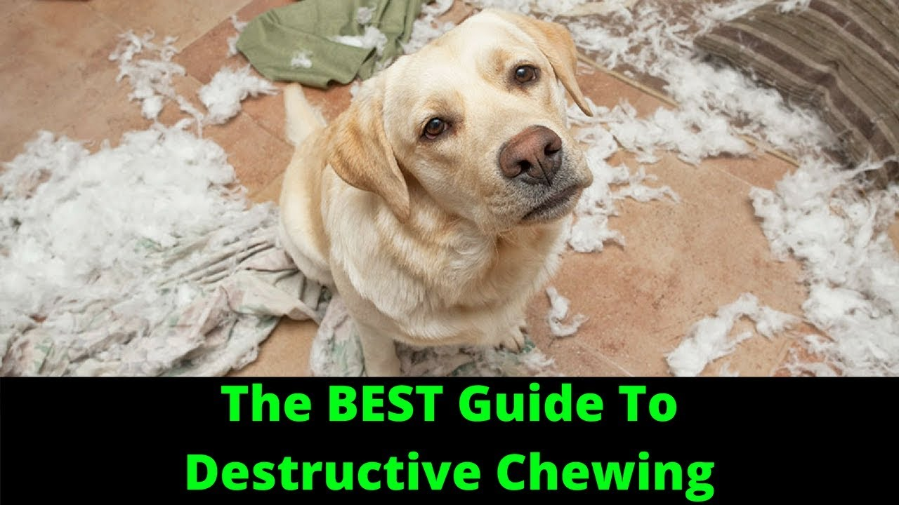 how to stop destructive chewing in dogs - youtube