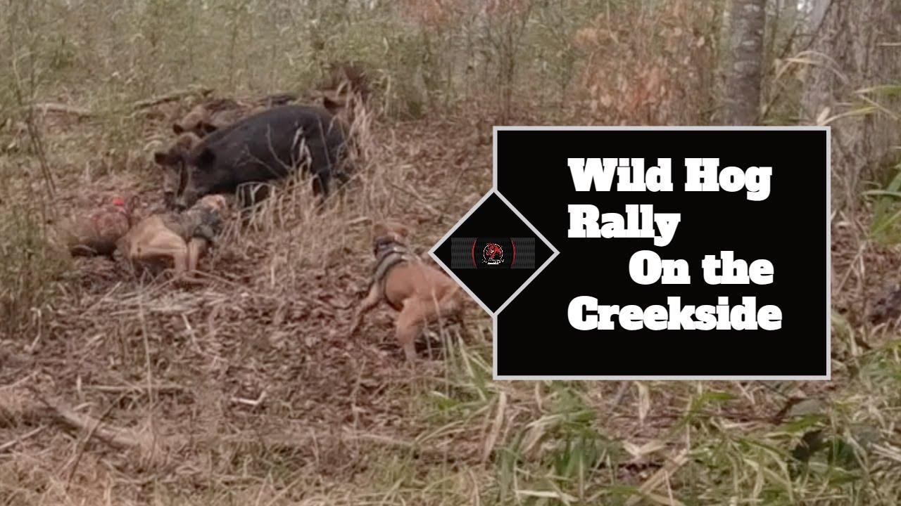 Wild Boar Rally near the Creek