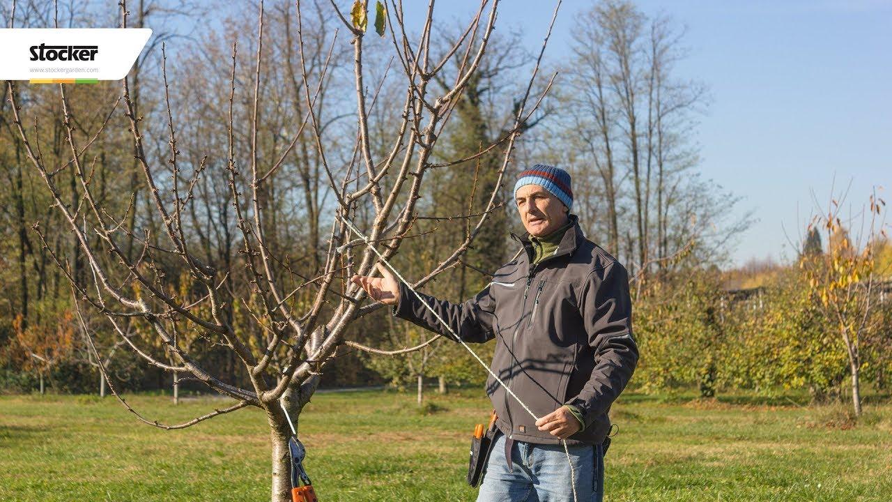 Come potare il melo: guida completa - Coltivare Facile