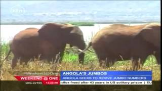 Angola seeks to conserve its wildlife and rebuild its elephant population