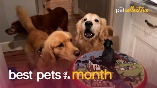 Best Pets of the Month (December 2020) | The Pet Collective