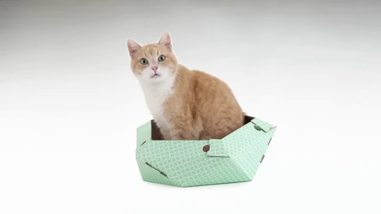 lit pour chat design free seroda le chat pet lounge lit lit pour chien en lit with lit pour. Black Bedroom Furniture Sets. Home Design Ideas