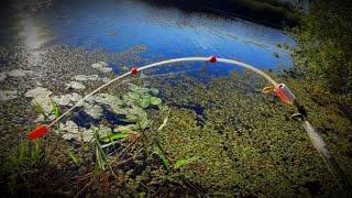 ОТ ЭТИХ ПОКЛЕВОК ДУХ ЗАХВАТЫВАЕТ рыбалка на удочку с боковым кивком в кувшинках