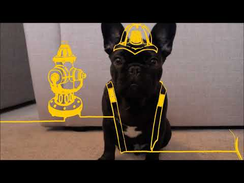 Dogs Trust Advert - Advertising Project