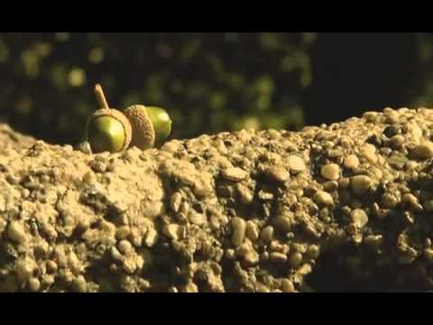 Wines of Hungary - Balaton Wine Region
