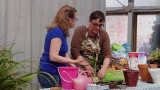 House Plant Rescue EP3 Moist Air Root Bound Plants