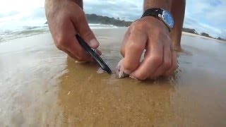 How to Catch Beach Worms for Beach Fishing.. South Coast NSW