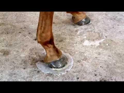 The Simple Trim, Part 8.  Treating hoof thrush.